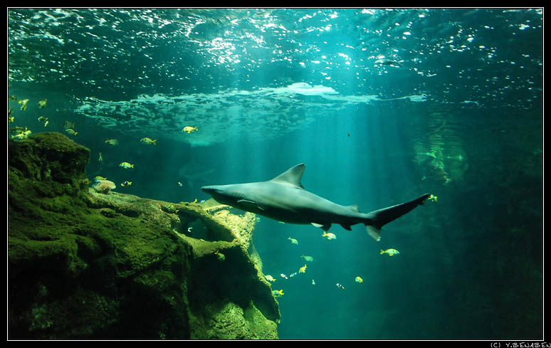 Galerie Photos Aquarium De La Rochelle Vieux Port